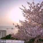 桜の季節がやってくる!