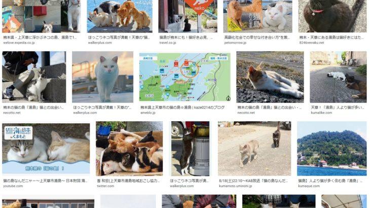 今日は猫の日ということで猫の島(上天草湯島)の話題を