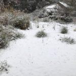天草に積雪が話題