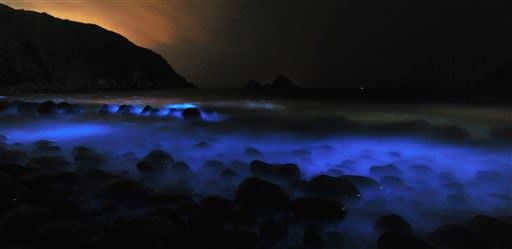 暗闇彩る青白い光 天草市の海岸に夜光虫